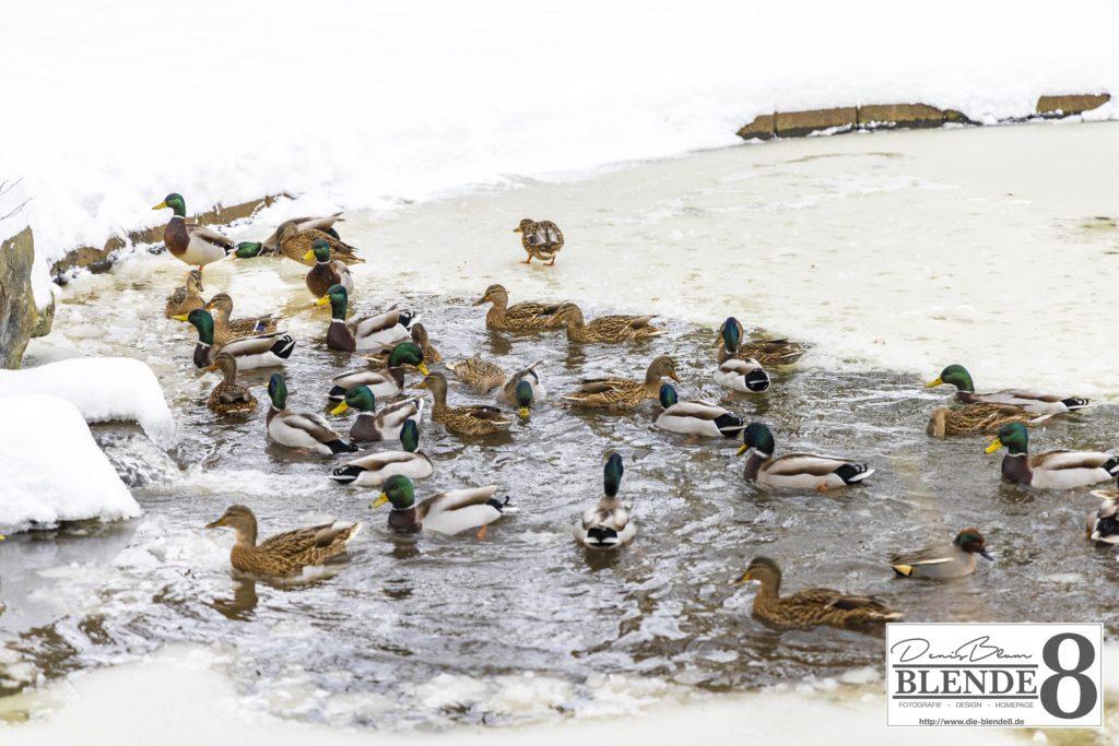 Blende8 Nordhessen Baunatal Schnee Foto-Nr. 3015-31